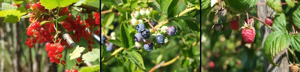 Gardenside Acres fresh fruit for camping breakfasts